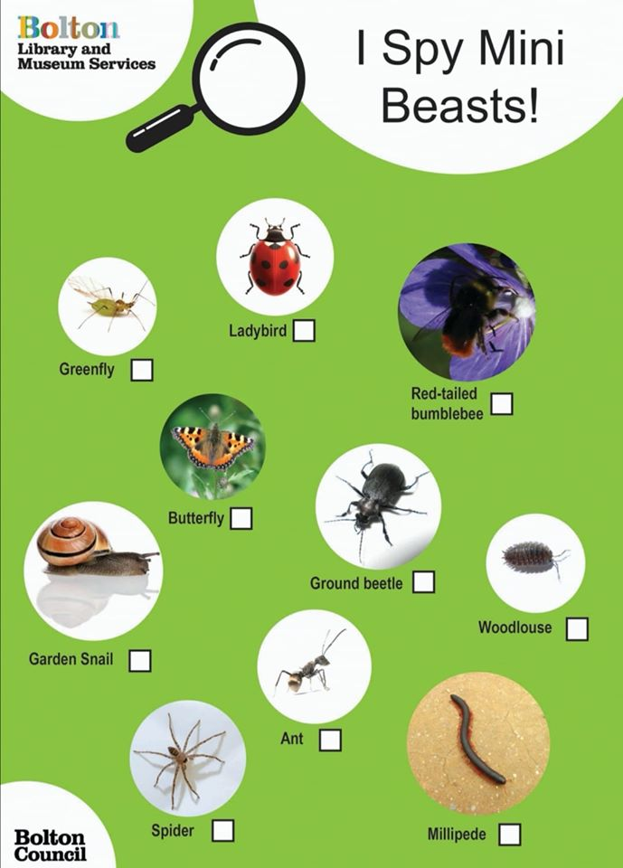 Mini beasts checklist